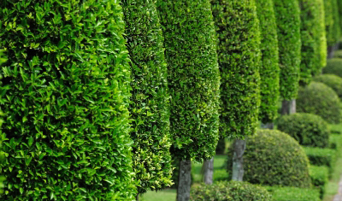 Nu-Arbor Tree and Shrub Care Products. Fertilizers, Biostimulants and Specialty Products